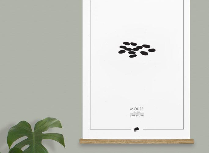 Momkai graphic design